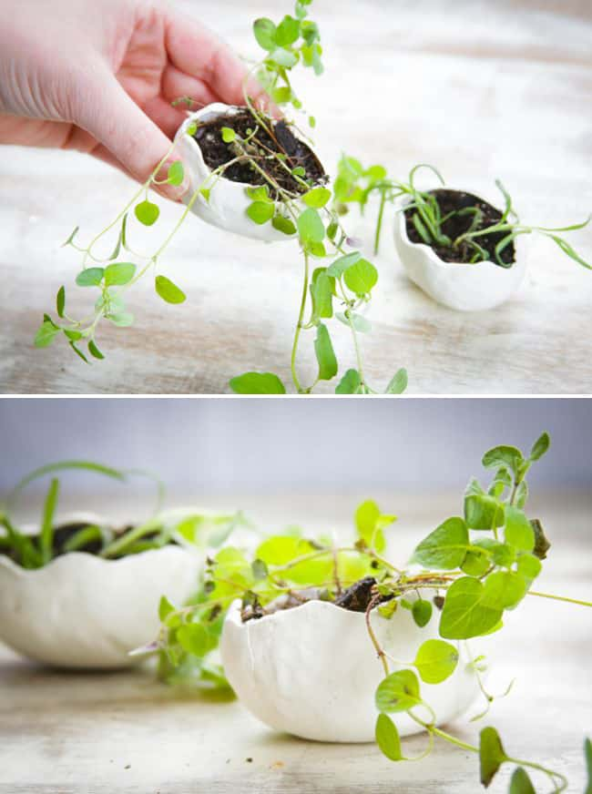 Clay Herb Planters