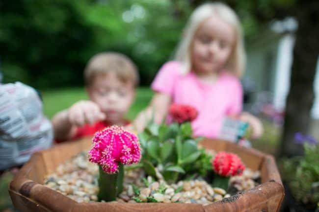 Growing Succulents | Hello Glow