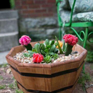 How to make a succulent garden - Hello Nest