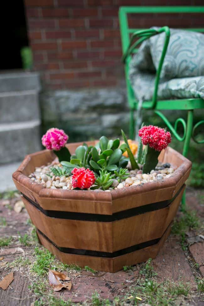 How to make a succulent garden | Hello Glow