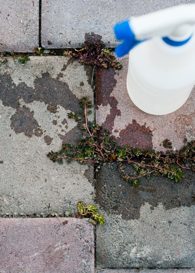 Natural Weed Killer (Organic and Safe!) | HelloGlow.co