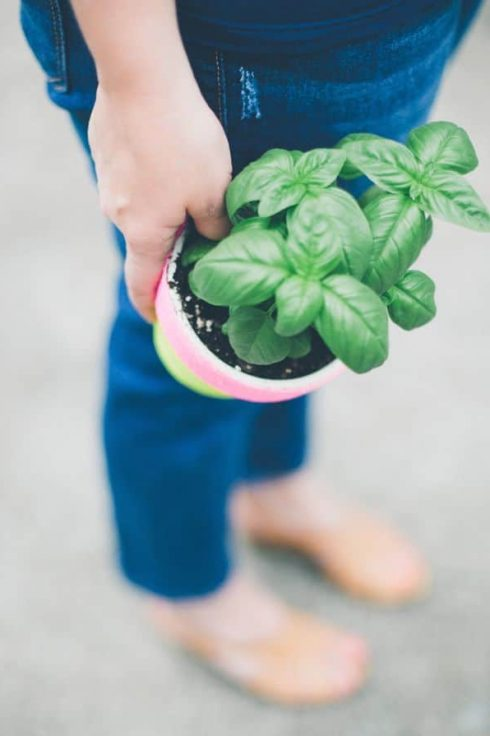 Growing herbs in small spaces