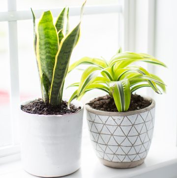 10 Plants for the Bathroom