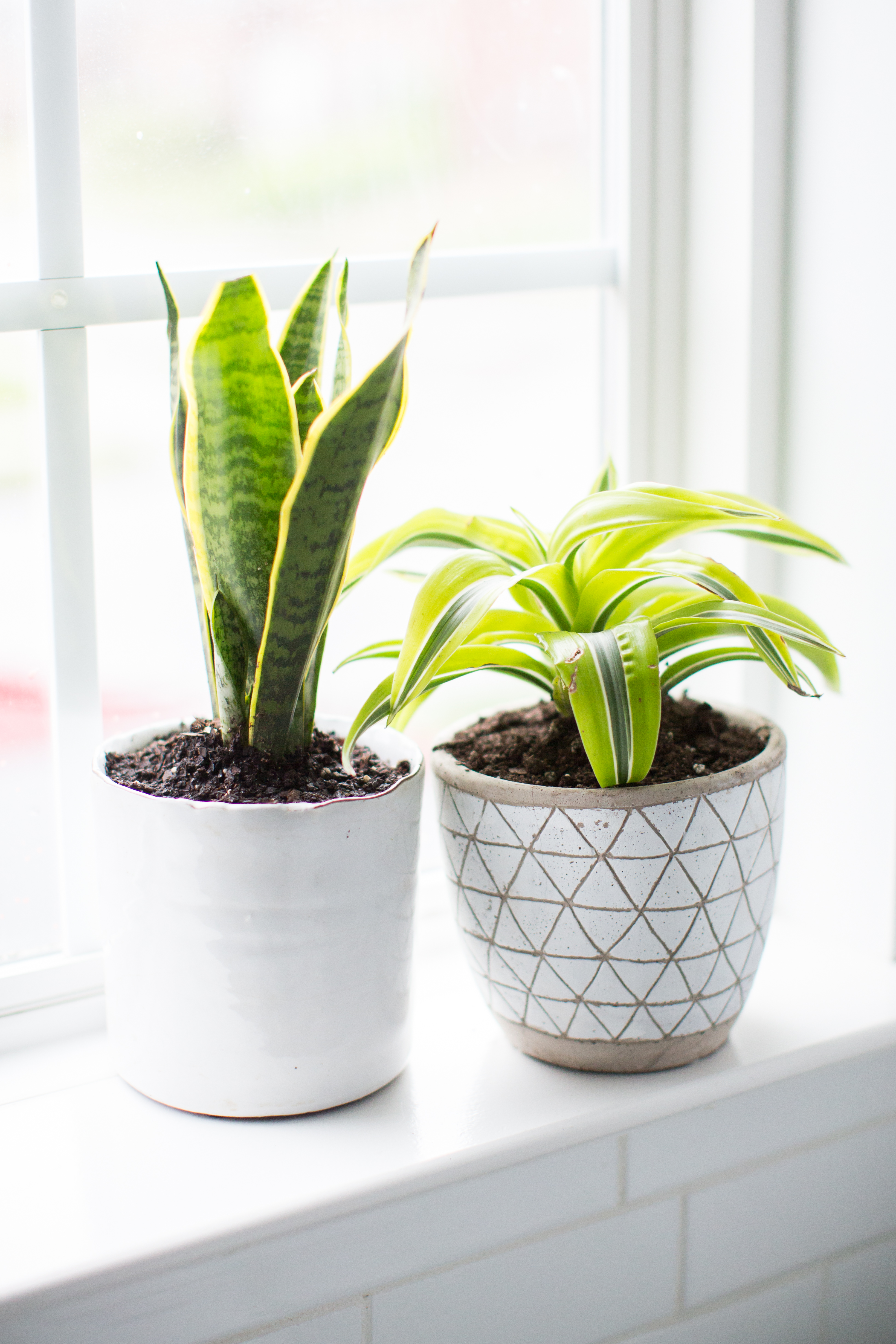 10 Plants that thrive in the bathroom