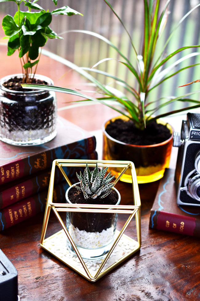 DIY open terrarium from Woman in Real Life | 8 Creative Candle Jar Uses
