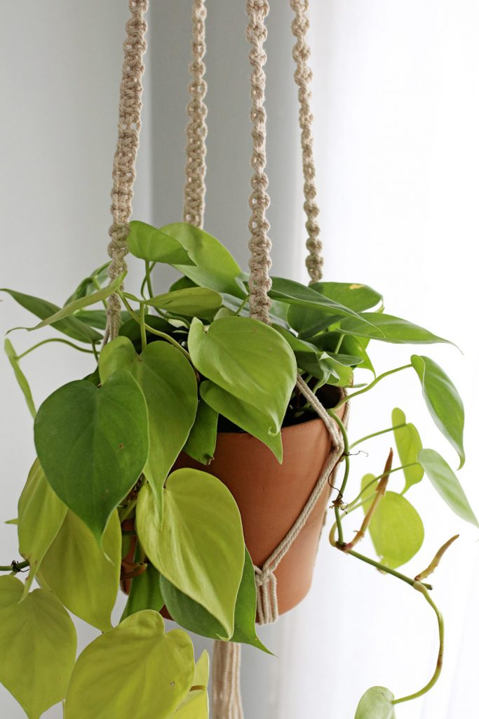 Pothos | The Best Plants for Low Light Spaces