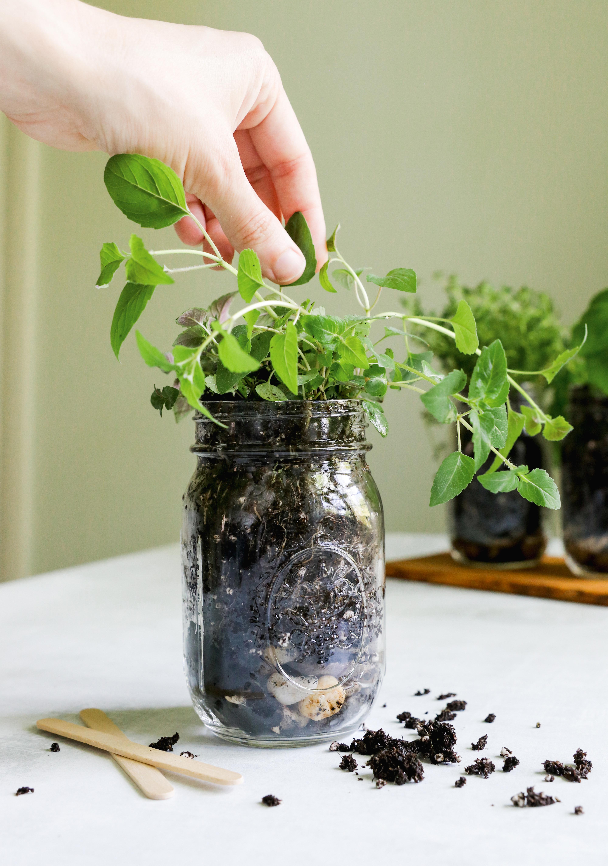 How to Make a Mason Jar Herb Garden