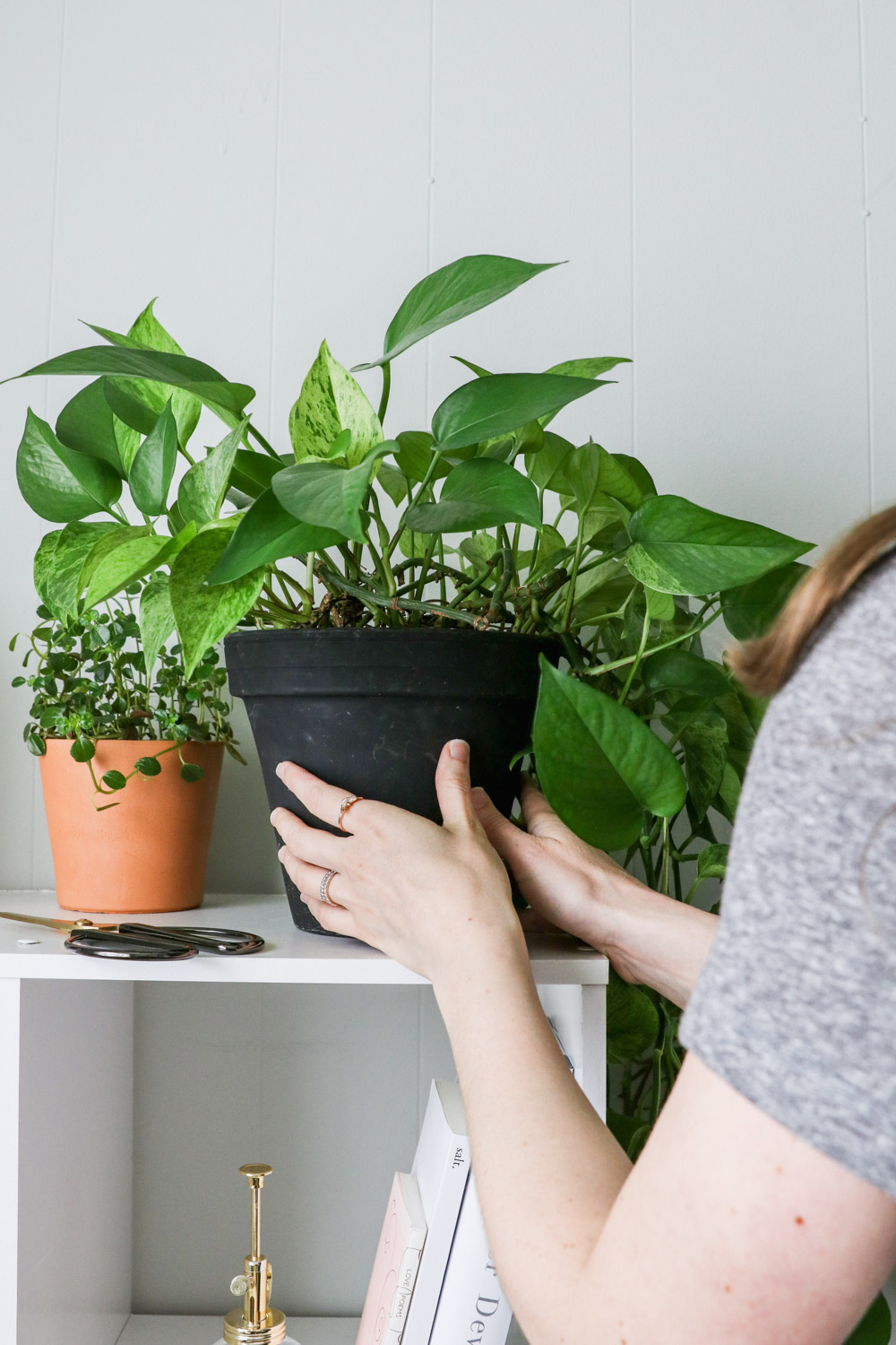 Multiply Your Plants for Free By Growing From Cuttings