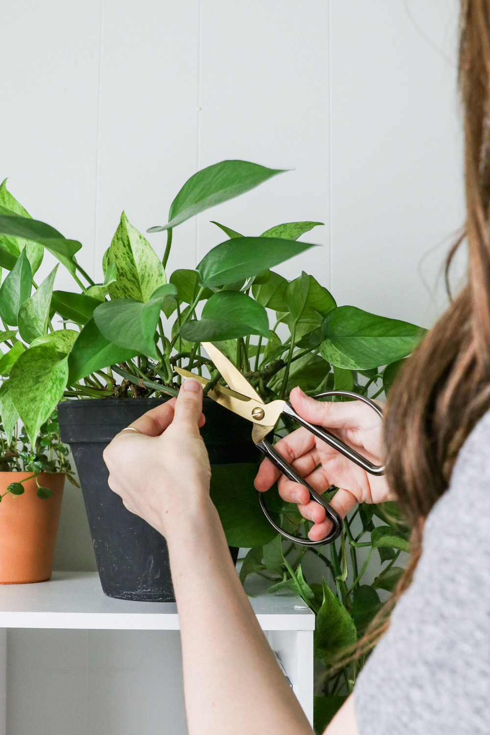 A How-To Guide on Growing from Cuttings