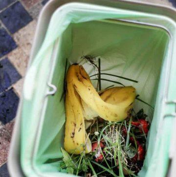 Compost Basics