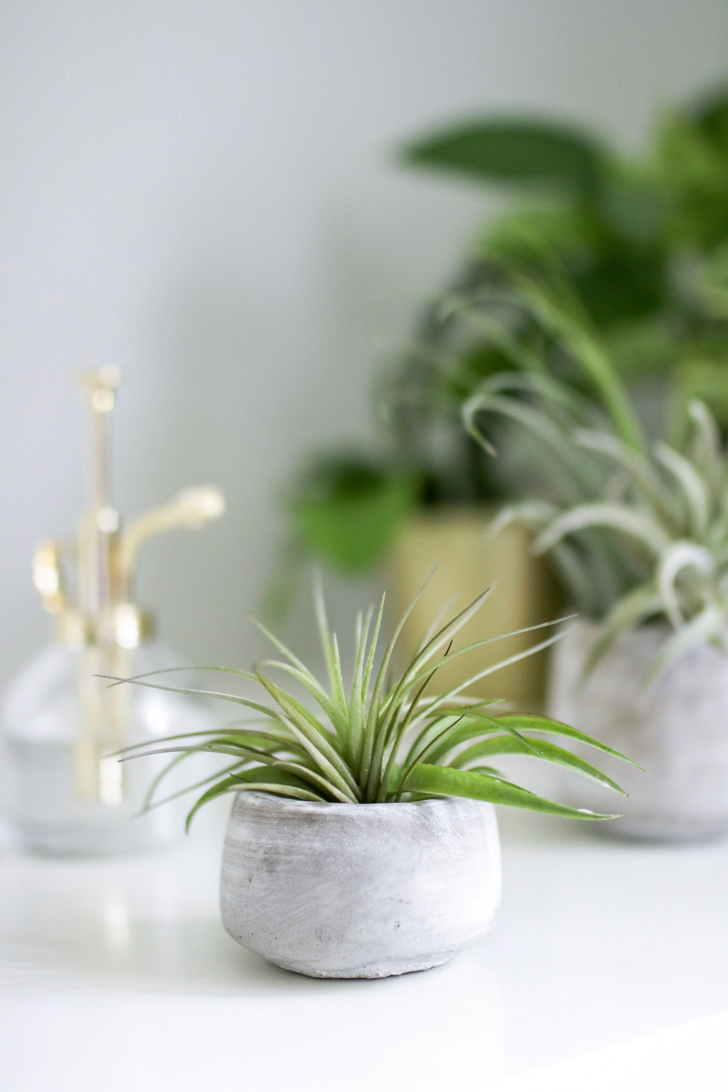 Containers for air plants