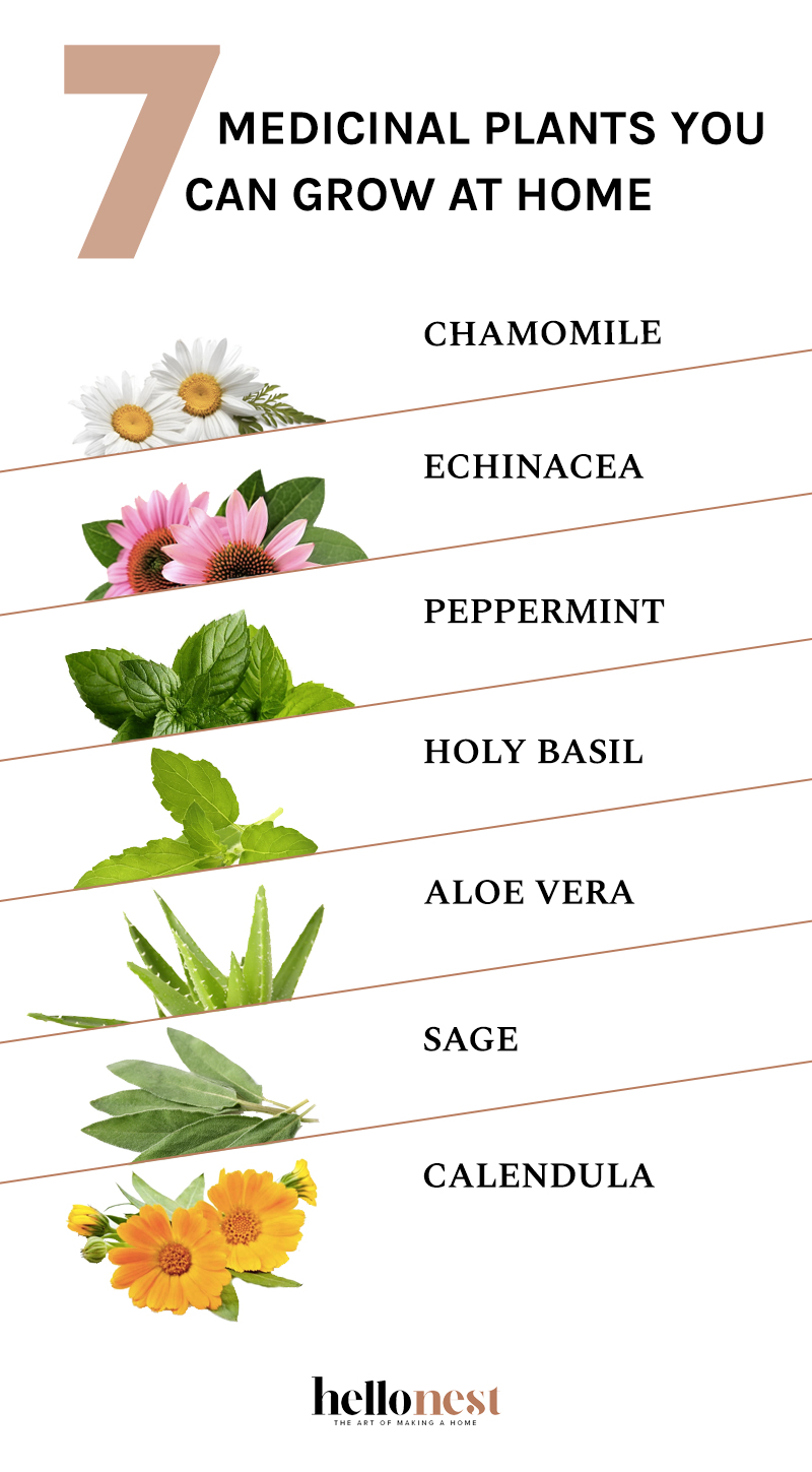 7 Medicinal Plants You Can Grow at Home - HelloNest.co