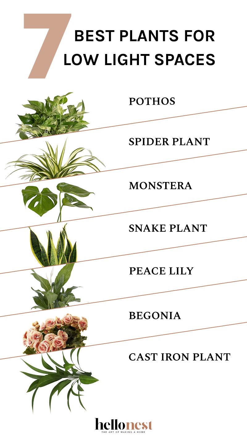 7 Best Plants for Low Light Spaces - HelloNest.co