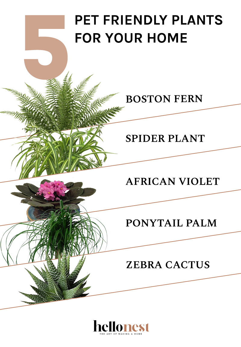 5 Pet Friendly Plants for Your Home - HelloNest.co