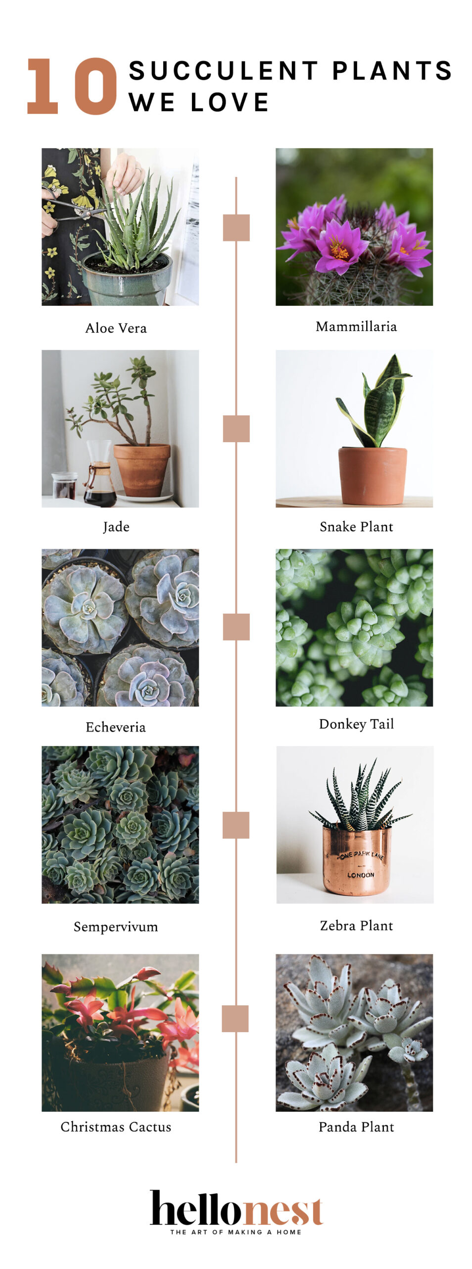 10 succulents we love + how to care for them - HelloNest.co