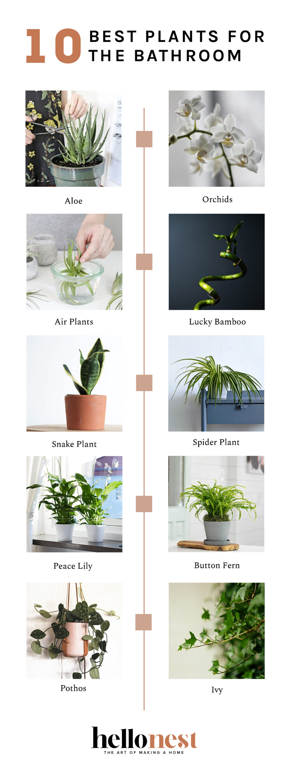 10 Best Plants for the Bathroom - HelloNest.co